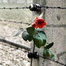 """Giornata della memoria. ANOLF, Saady: """"Onorare la Shoah sia di monito contro derive d'odio e intolleranza"""""""